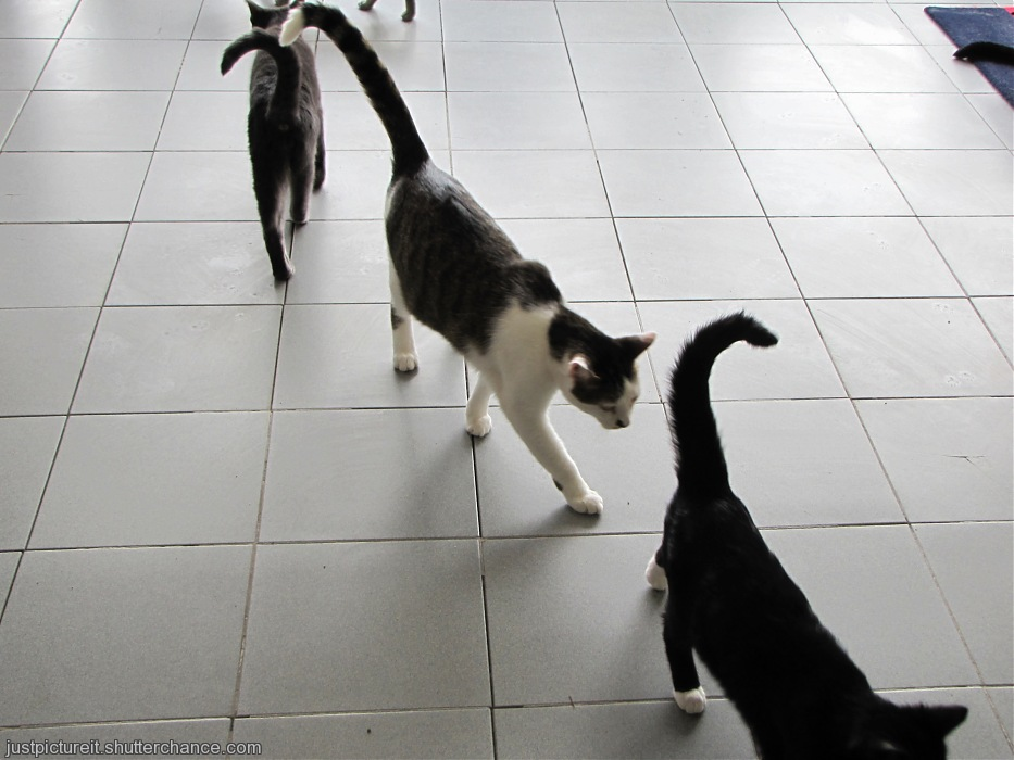 photoblog image Line Dancing Cats