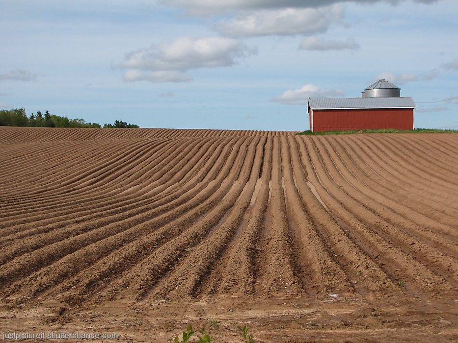 photoblog image Red Barn in Potato Rows