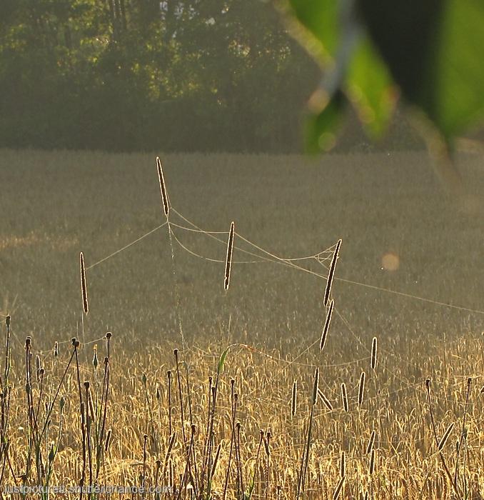 photoblog image Sunlit Weeds