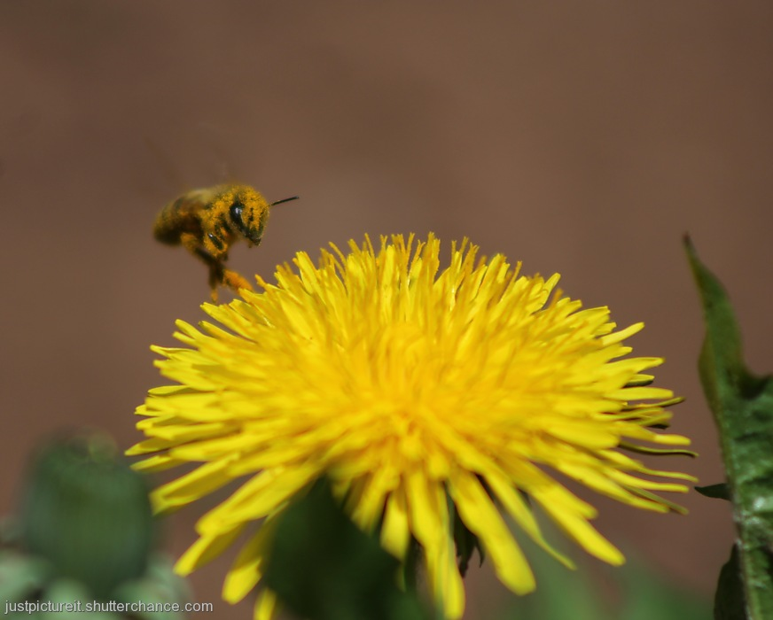 photoblog image Pollinated Pollinators