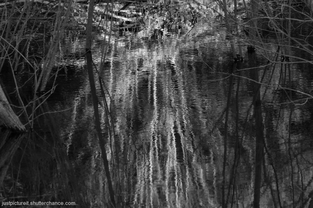 photoblog image Monday Reflections