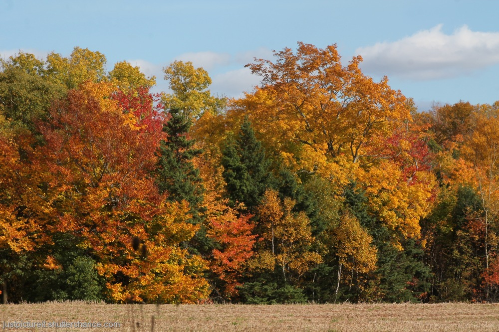 photoblog image Autumn Glory