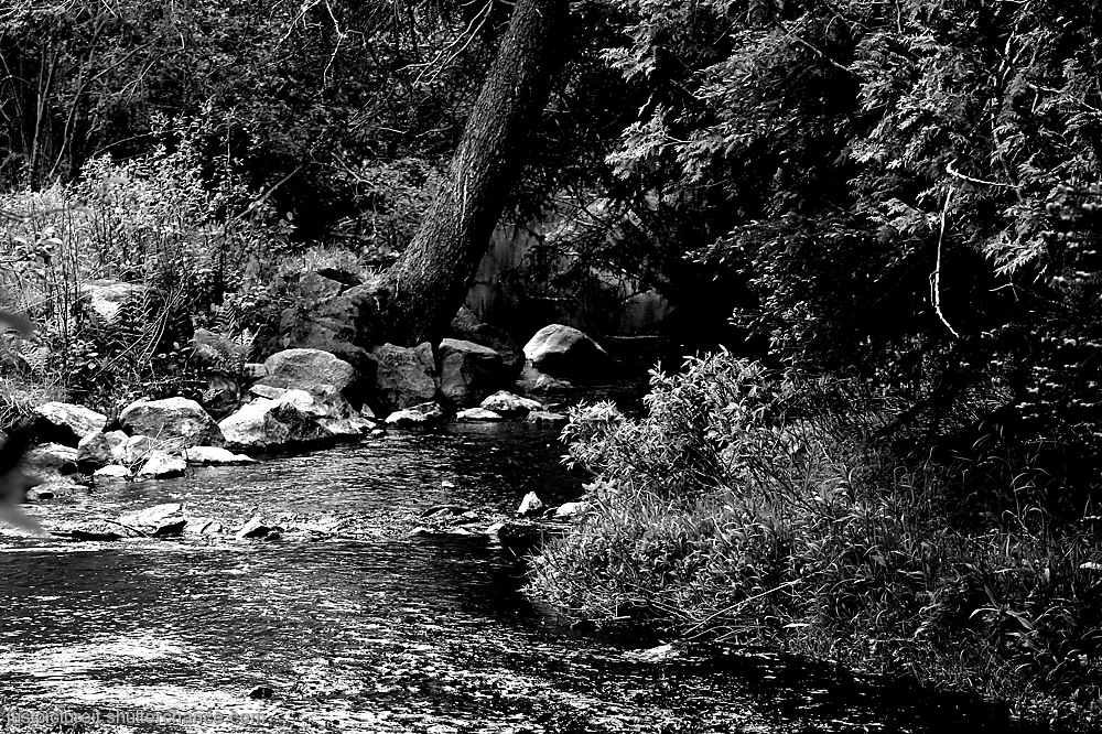 photoblog image The River