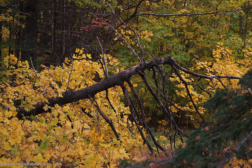 photoblog image Fallen Yellow Tree