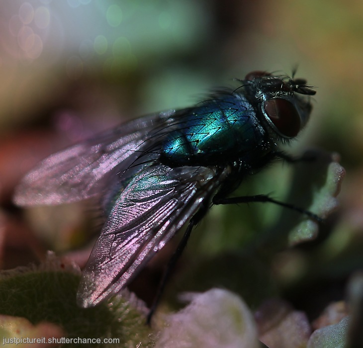 photoblog image Disco Fly