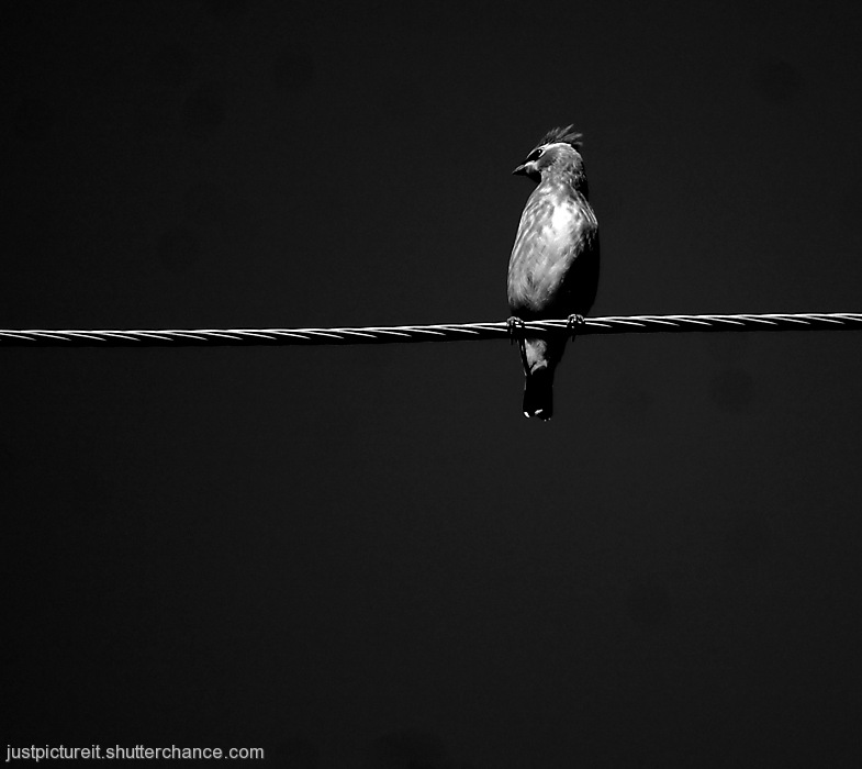 photoblog image Bird on a Wire