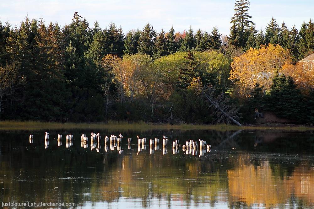photoblog image Gulls Landing