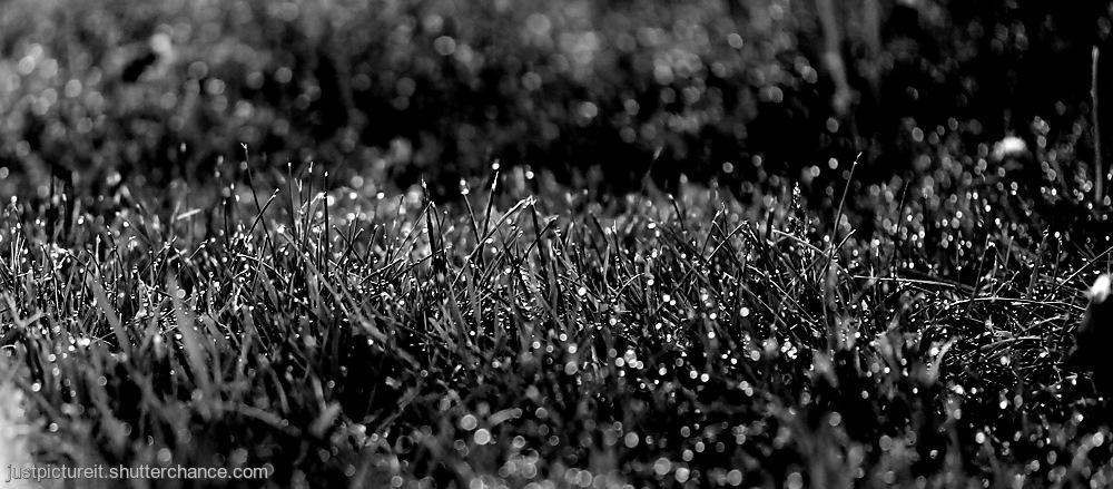photoblog image Diamonds