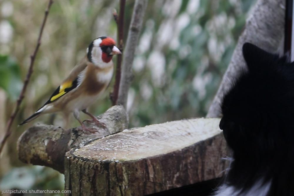 photoblog image Birdwatching
